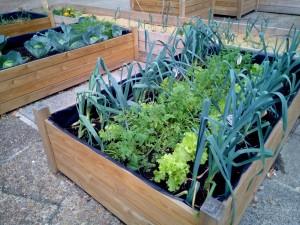 jardineria-huerto-urbano