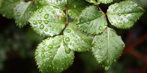 ahorrar-agua-en-el-jardin