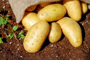 potatoes-1585075