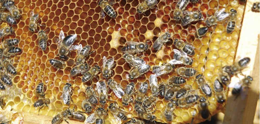Guadalajara tierra de miel