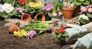 plantar en invierno o primavera