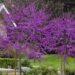 Los cinco mejores árboles de hoja caduca